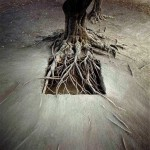 Nils Udo - Tree Roots - Land Art Installation