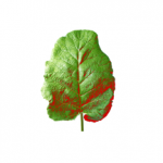 Leaf++: Analyzing the structure of a leaf