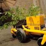 JUREMA ACTION PLANT