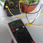 Plant Battery / Pflanzenbatterie