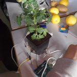 Plant Resistor Sensing