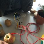 Makey Makey and Plants for direct computer input